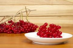 Berries red currants Royalty Free Stock Image
