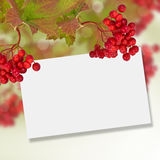 Berries of red viburnum. Autumn background. Royalty Free Stock Photo