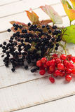 Berries of red viburnum and elderberry Stock Photo