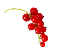 Berries of red viburnum isolated Stock Image
