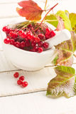Berries of red viburnum Royalty Free Stock Photo