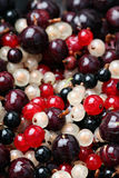 Berries. Stock Images