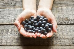 cherries and blueberries black senior dating