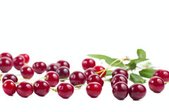 Berries ripe cherry with a branch. Stock Image