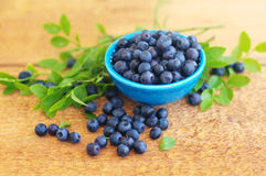 Berries of ripe juicy bilberry in a blue small plate Stock Photography