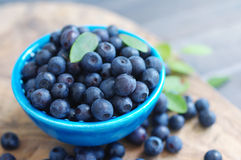 Berries of ripe juicy bilberry in a blue small plate Royalty Free Stock Images