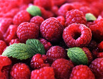 Berries of a ripe raspberry Royalty Free Stock Images