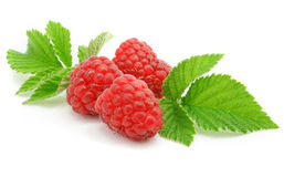 Berries ripe raspberry with leaf isolated. On white background Royalty Free Stock Image