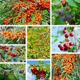 Berries ripe set Stock Image