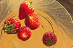 Berries ripe strawberries,illuminated by the sun Stock Photos