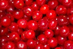 Berries  ripened cherries Royalty Free Stock Photos