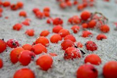 Berries in the sand. Red berries in the sand royalty free stock photo