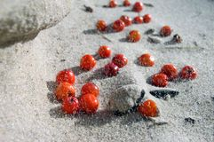 Berries on the Sand. With blowing wind royalty free stock photography