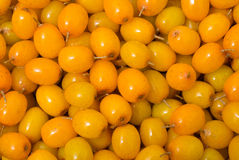 Berries of sea-buckthorn 11 Stock Photo