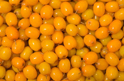 Berries of sea-buckthorn 12 Royalty Free Stock Images