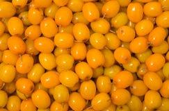 Berries of sea-buckthorn 12 Royalty Free Stock Images