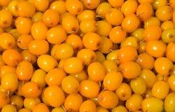 Berries of sea-buckthorn 18 Royalty Free Stock Image
