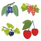 Berries set Stock Photo