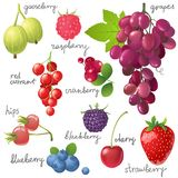 Berries Set Royalty Free Stock Images