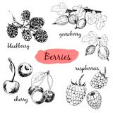 Berries. Set of illustrations Stock Photos