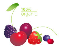 Berries set with 100 per cent organic lettering  on white background. Healthy lifestyle concept. Vector illustration Stock Photo