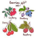 Berries set 1 Stock Images