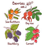 Berries set 2 royalty free illustration