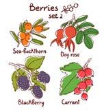 Berries set 2 Stock Photo