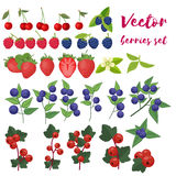 Berries Set Vector Illustration. Strawberry, Blackberry, Blueberry, Cherry, Raspberry, Red currant. Berries and their Stock Photos