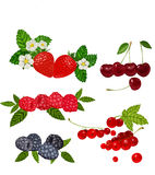 Berries Set Vector Illustration. Strawberry, Blueberry, Cherry, Raspberry, Red currant. Royalty Free Stock Images