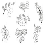 Berries sketch seamless pattern. Vector illustration Stock Photography