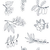 Berries sketch seamless pattern. Vector illustration Stock Photo