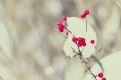 Berries on the snow Stock Photos