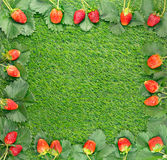 Berries and strawberry leaves frame Stock Photos