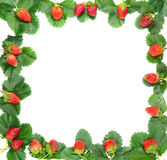 Berries and strawberry leaves frame Stock Photography