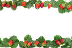 Berries and strawberry leaves frame Stock Photo