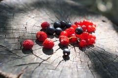 Berries on stub Royalty Free Stock Photos