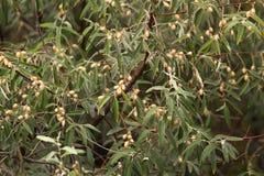 Berries Tree Stock Photo