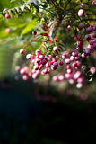 Berries on the tree Stock Photography