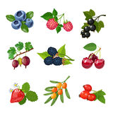 Berries Of Trees And Shrubs Set Stock Photos