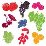 Berries Vector Collection. Colorful illustration Stock Photo