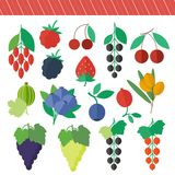 Berries vector elements set. Berries set of vector isolated elements for web design in flat style vector illustration