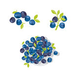 Berries vector illustration. Royalty Free Stock Images