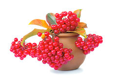 Berries of viburnum and yellow leaves in a ceramic vase on a whi Royalty Free Stock Photos
