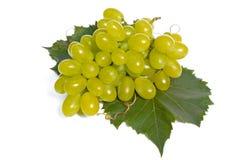 Berries of vine Stock Photo