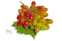 Berries of vine Royalty Free Stock Photos
