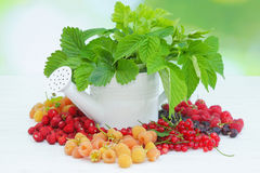 Berries and watering can Stock Photos