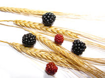 Berries and wheat royalty free stock photography