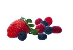 Berries on White Stock Photography