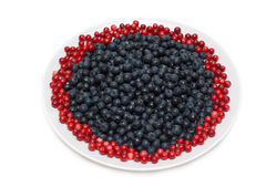 Berries of the whortleberry and cowberries Stock Image